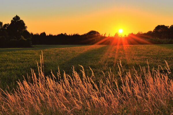 backlit-cropland-dawn-1237107